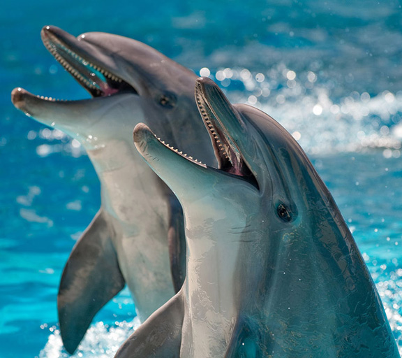 Les sons et le chant des dauphins en ligne
